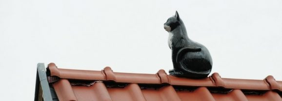 How do you protect your tile roof?